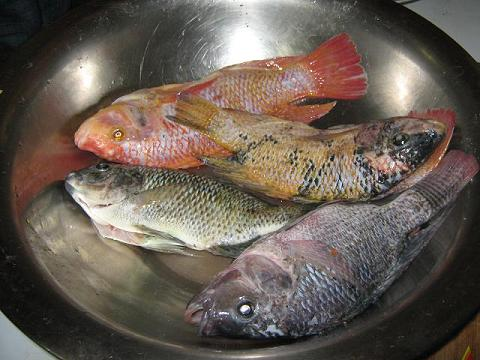 Jamaican steamed fish jamaica my way for Jamaican butter fish
