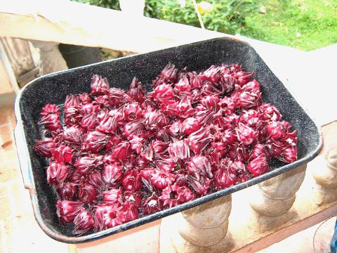 Red Sorrel fruit in a pan